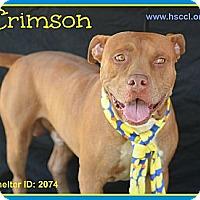 Adopt A Pet :: Crimson - Plano, TX