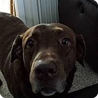 Adopt A Pet :: Samantha - Acushnet, MA