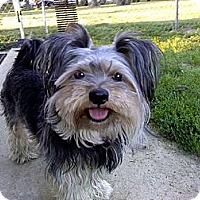 Adopt A Pet :: Romeo - Kokomo, IN
