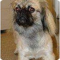 Adopt A Pet :: Romeo - Tyler, TX
