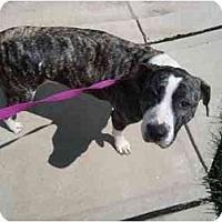 Adopt A Pet :: Beauty - Reisterstown, MD