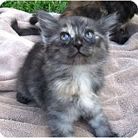 Adopt A Pet :: Candi - Brea, CA