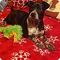 Adopt A Pet :: Tippi - Homewood, AL