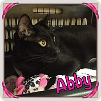 Adopt A Pet :: Abby - Bradenton, FL