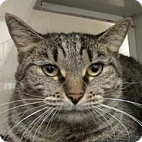 Adopt A Pet :: Leila - Gilbert, AZ
