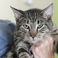 Adopt A Pet :: Bobbi - Westchester, CA