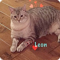 Adopt A Pet :: Leon - Foothill Ranch, CA