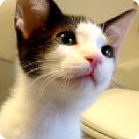 Adopt A Pet :: Dizzy - Durham, NC