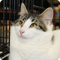 Adopt A Pet :: Zachary - Berkeley Hts, NJ