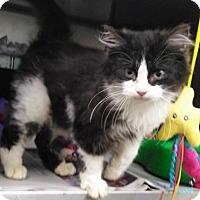 Adopt A Pet :: C-68137 Gage - Westampton, NJ