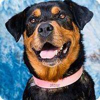 Adopt A Pet :: Allona - Clayton, NC