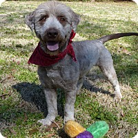 Adopt A Pet :: Devlyn - Mocksville, NC