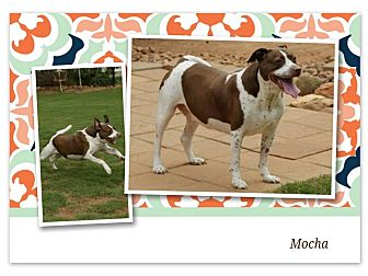 German Shorthaired Pointer/Retriever (Unknown Type) Mix Dog for adoption in Newnan, Georgia - Mocha