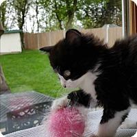 Adopt A Pet :: Becky - Sparta, NJ