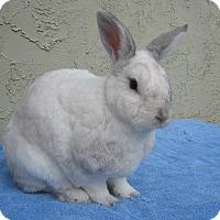 Adopt A Pet :: Jasper - Bonita, CA
