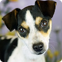 Adopt A Pet :: INDY - LAFAYETTE, LA