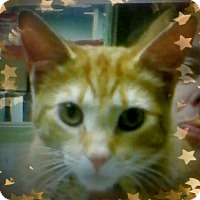 Adopt A Pet :: Murtaugh - Trevose, PA