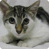 Adopt A Pet :: Martin - Gary, IN