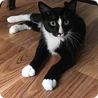 Adopt A Pet :: Oreo - Jerseyville, IL