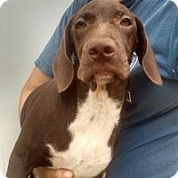 Adopt A Pet :: Coco - Oviedo, FL