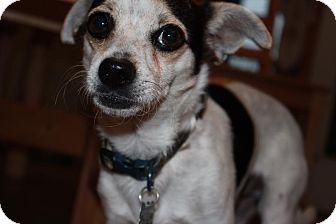 Chihuahua Mix Dog for adoption in Duchess, Alberta - Durango