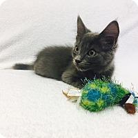 Adopt A Pet :: Mankey - Mission Viejo, CA