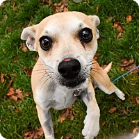 Adopt A Pet :: Taco - Meridian, ID