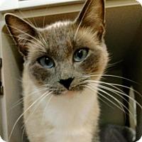 Adopt A Pet :: Lacey - Shoreline, WA