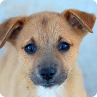 Adopt A Pet :: Kinzi - Bedminster, NJ
