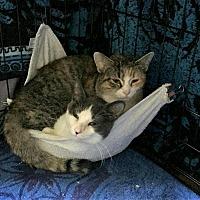 Adopt A Pet :: Sophia - Rochester, MN