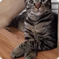 Adopt A Pet :: Phelps - Oakland Park, FL