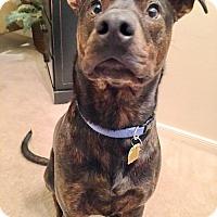Adopt A Pet :: Milo - Alvin, TX
