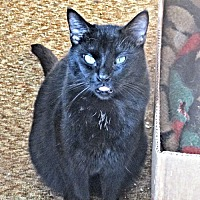 Adopt A Pet :: Thomas - Princeton, NJ