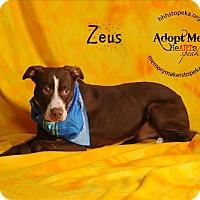Adopt A Pet :: Zeus - Topeka, KS