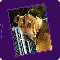 Adopt A Pet :: MIA - Dallas, NC