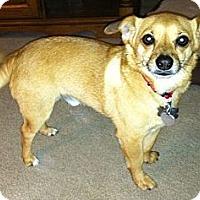 Adopt A Pet :: Bernie - Ocala, FL