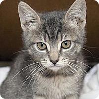 Adopt A Pet :: Lacie - Irvine, CA