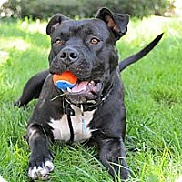 Adopt A Pet :: Baby (courtesy listing) - Mission Viejo, CA