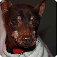 Adopt A Pet :: Calvin - Summerville, SC