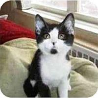 Adopt A Pet :: Domino - Island Park, NY