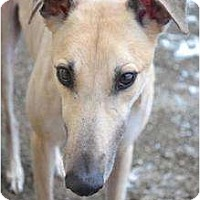 Adopt A Pet :: Bingo (PTL Bingo) - Chagrin Falls, OH