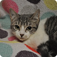 Adopt A Pet :: Cherry - Rockaway, NJ