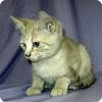 Adopt A Pet :: Ramey - Powell, OH