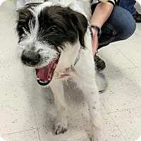 Adopt A Pet :: Sophie in CT - East Hartford, CT