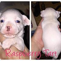 Adopt A Pet :: Raspberry Tart - Oakley, CA