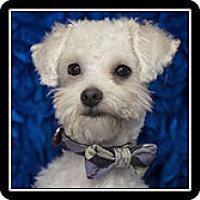 Adopt A Pet :: Jamie - San Diego, CA