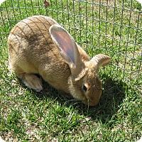 Adopt A Pet :: Luna - Bonita, CA