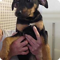 Adopt A Pet :: Glitter - Cashiers, NC