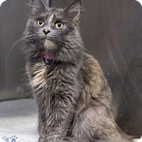 Adopt A Pet :: Leilani - Merrifield, VA