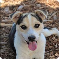 Adopt A Pet :: JACKIE - Red Bluff, CA